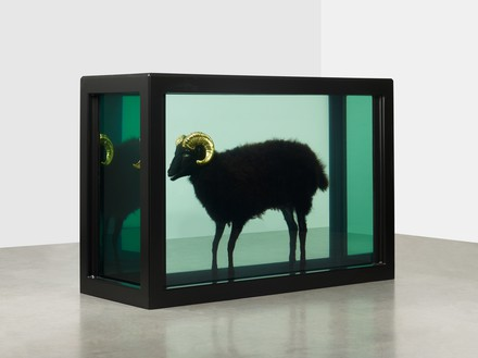 Damien Hirst, Black Sheep with Golden Horns, 2009 Glass, painted stainless steel, silicone, acrylic, gold, cable ties, sheep, and formaldehyde, 43 ½ × 63 ⅞ × 25 ¼ inches (110.3 × 162.3 × 64.1 cm)© Damien Hirst and Science Ltd. All rights reserved, DACS 2018