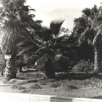 Ed Ruscha, Palm Tree #2, 1971/2003 Gelatin silver print, 14 × 11 inches (35.6 × 27.9 cm), edition of 8© Ed Ruscha
