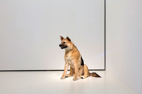 Piero Golia, The Dog and the Drop, 2013 Animatronic dog , solenoids and sync devicePhoto by Zarko Vijatovic