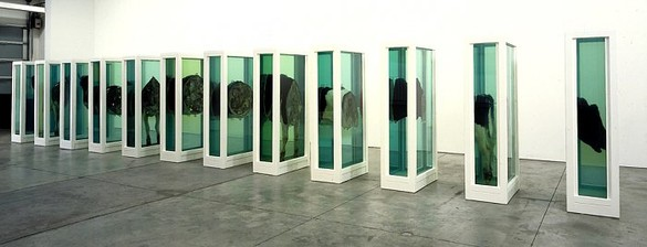 Damien Hirst, Some Comfort Gained from the Acceptance of the Inherent Lies in Everything, 1995 Steel, glass, cows and formaldehyde solution, 12 tanks: 78 ¾ × 35 ⅜ × 11 ¾ inches each (200x 90 × 30 cm)