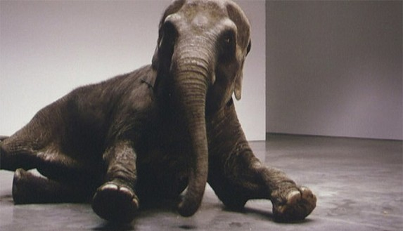 Douglas Gordon, Play Dead; Real Time (Other Way), 2003 (video still) DVD on monitor, Dimensions variable, edition of 7