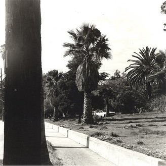 Ed Ruscha, Palm Tree #3, 1971/2003 Gelatin silver print, Image: 10 × 10 inches (25.4 × 25.4 cm), edition of 8