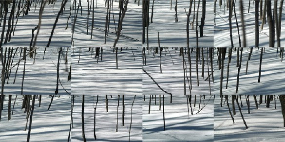 ELYN ZIMMERMAN Winter Trees III, 2004 Digital chromogenic print Size varies Ed. of 5