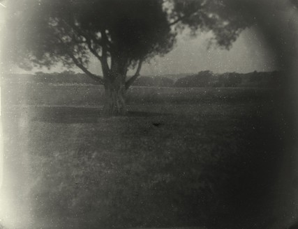 Sally Mann, Battlefields, Antietam, (Robbie's Tree), 2001 Gelatin silver print, 38 × 48 inches, (96.5 × 121.9 cm), edition of 5