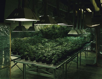 Taryn Simon, Research Marijuana Crop Grow Room, National Center for Natural Products Research, Oxford, Mississippi, from the series An American Index of the Hidden and Unfamiliar, 2007 Chromogenic print, framed: 37 ¼ × 44 ½ inches (94.6 × 113 cm), edition of 7 + 2 AP© Taryn Simon