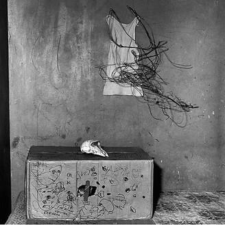 Roger Ballen, Cat in box, 2002 Selenium toned gelatin silver print, 15 × 15 inches (38.1 × 38.1 cm), edition of 10