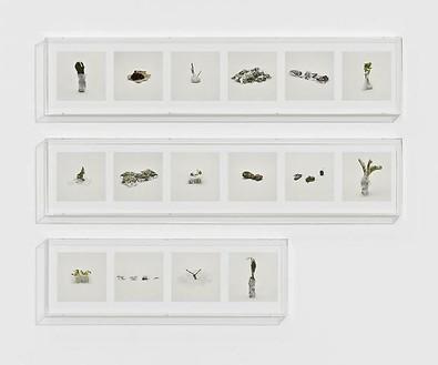 Taryn Simon, PLANTS (PROHIBITED), 2010 16 archival inkjet prints in 3 Plexiglas boxes, Box 1 & 2: 9 ¼ × 44 ½ × 2 ½ inches (23.5 × 113 × 6.4 cm); Box 3: 9 ¼ × 30 × 2 ½ inches (23.5 × 76.2 × 6.4cm), edition of 4Photo by Douglas M. Parker Studio