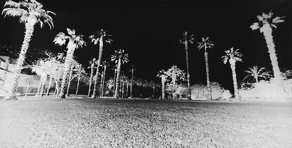 Vera Lutter, Palm Trees, Giza: April 20, 2010, 2010 Unique Silver Gelatin Print, 14 ⅜ × 27 ¼ inches, (36.5 × 69.2cm)
