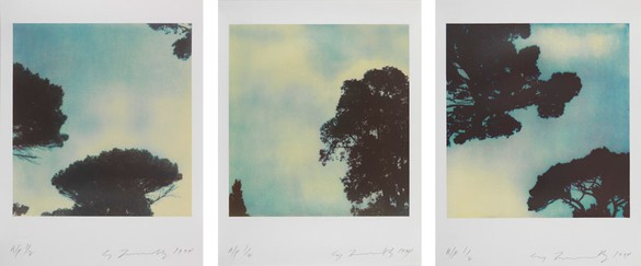 Cy Twombly, Trees, 1994 Portfolio of 3 dry ink photographs, each: 21 ⅝ × 16 ⅜ inches (54.9 × 41.6 cm), edition of 10© Nicola Del Roscio Foundation