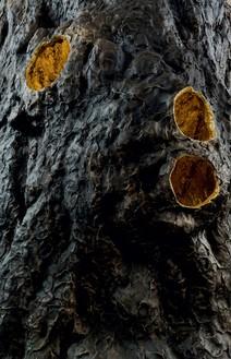 Giuseppe Penone, Luce zenitale / Zenithal Light, 2012 (detail) Bronze and gold, 157 ½ × 59 ⅛ × 59 ⅛ inches (400 × 150 × 150 cm)© Giuseppe Penone