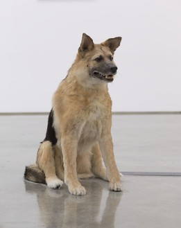 Piero Golia, The Dog and the Drop, 2013 (view 1) Animatronic dog, solenoids, and sync device, Dimensions variable