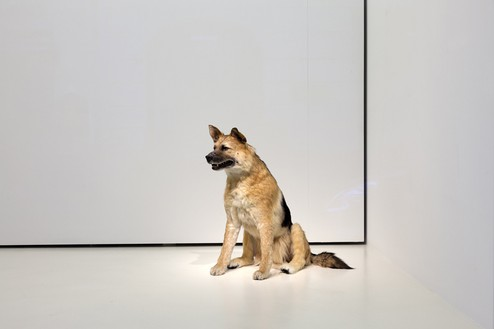 Piero Golia, The Dog and the Drop, 2013 (view 2) Animatronic dog, solenoids, and sync device, Dimensions variable