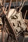 Giuseppe Penone: Leaves of Stone / Foglie di pietra, Hong Kong