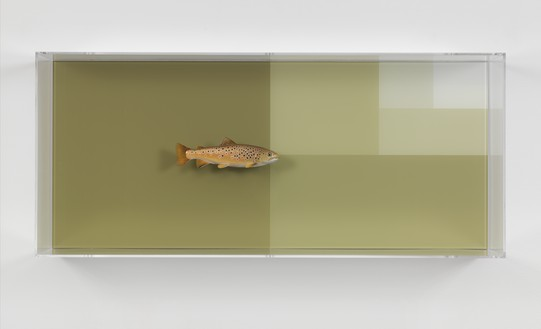 Carsten Höller, Divisions (River Trout and Surface), 2017 Acrylic glass, paint, stainless steel, screws, and fish taxidermy by Matthias Fahrni, 40 ¾ × 17 ½ × 9 ¼ inches (103.5 × 44.5 × 23.6 cm)© Carsten Höller. Photo: Rob McKeever
