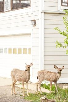 Roe Ethridge, Deer, 2017 Dye-sublimation print, 49 ½ × 33 inches (125.7 × 83.8 cm)© Roe Ethridge