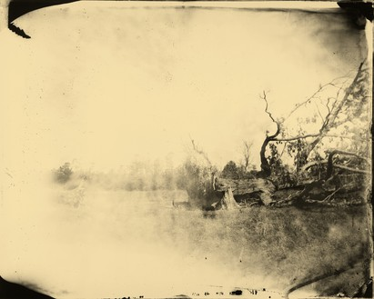 Sally Mann, Deep South, Untitled (Fallen Tree), 1998 Tea-toned gelatin silver print, 40 × 50 inches (101.6 × 127 cm)© Sally Mann
