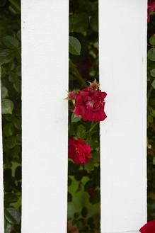 Roe Ethridge, Picket Fence II, 2017 Dye sublimation print on aluminum, 49 ½ × 33 inches (125.7 × 83.8 cm), edition of 5 + 1 AP© Roe Ethridge