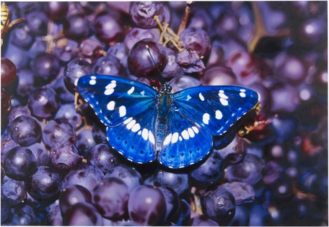 Damien Hirst, Limenitis reducta in Vitis vinifera, 2009 Oil on canvas, 74 × 108 inches (188 × 274.3 cm)© Damien Hirst and Science Ltd. All rights reserved, DACS 2021