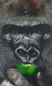 Damien Hirst, Gorilla Eats Green Pepper, 2013 Oil on canvas, 96 × 58 ½ inches (243.8 × 148.6 cm)© Damien Hirst and Science Ltd. All rights reserved, DACS 2021. Photo: Prudence Cuming Associates