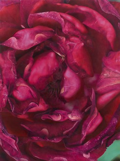 Damien Hirst, Dark Pink Rose, 2019 Oil on canvas, 51 × 38 inches (129.4 × 96.5 cm)© Damien Hirst and Science Ltd. All rights reserved, DACS 2021. Photo: Prudence Cuming Associates