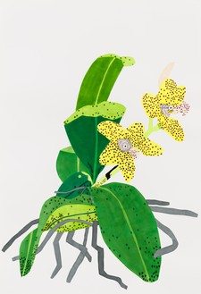 Jonas Wood, Yellow Orchid with Purple Dots, 2020 Gouache and colored pencil on paper, 59 ⅞ × 40 ⅞ inches (152.1 × 103.8 cm)© Jonas Wood