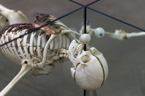 Damien Hirst, Death Is Irrelevant, 2000 (detail) © Damien Hirst and Science Ltd. All rights reserved, DACS 2019