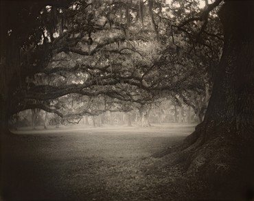 Sally Mann, Deep South, Untitled (Fontainebleau), 1998, National Gallery of Art, Washington, DC © Sally Mann