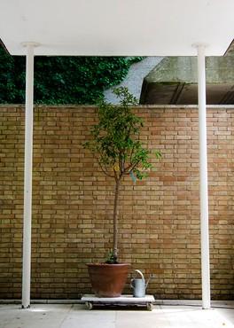 Carsten Höller, Smelling Tree (Portrait of Cedric Price), 2014 © Carsten Höller. Photo: Ivo Pisanti