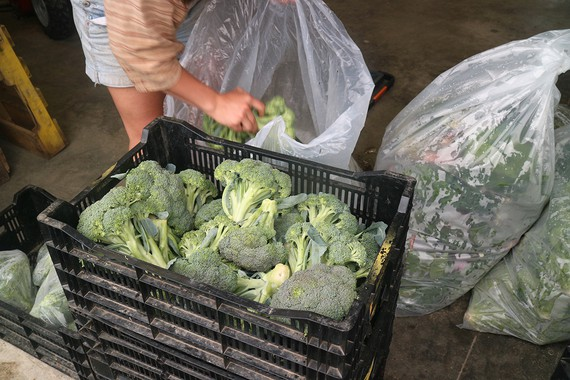 Vegetables from Sky High Farm being prepared for distribution in New York