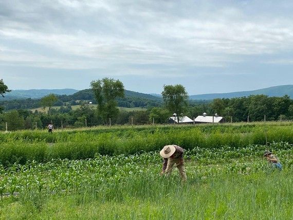 Sky High Farm, Columbia County, New York