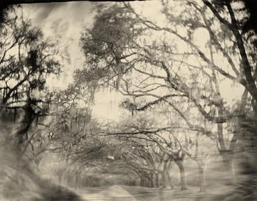 SallyMann,Georgia, Untitled (Allee), 1996 © Sally Mann