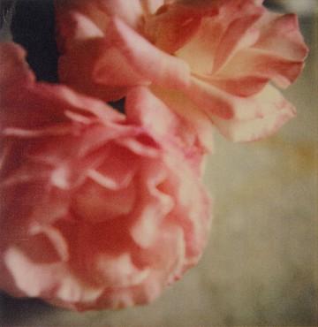 Cy Twombly, Roses, Gaeta, 2004 © Fondazione Nicola Del Roscio