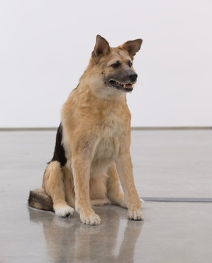 Piero Golia, The Dog and the Drop, 2013 © Piero Golia