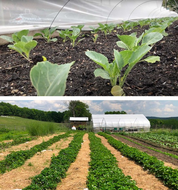 Top: Project EATS farm, Brooklyn, New York; bottom: Sky High Farm, Columbia County, New York