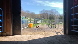 Chicken and barn at Sky High Farm in Columbia County, New York.